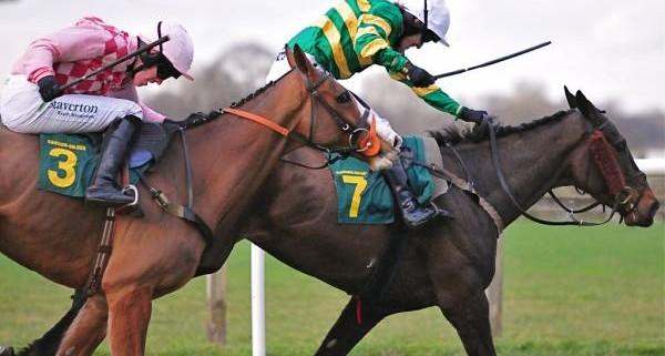 ap mccoy racing horses