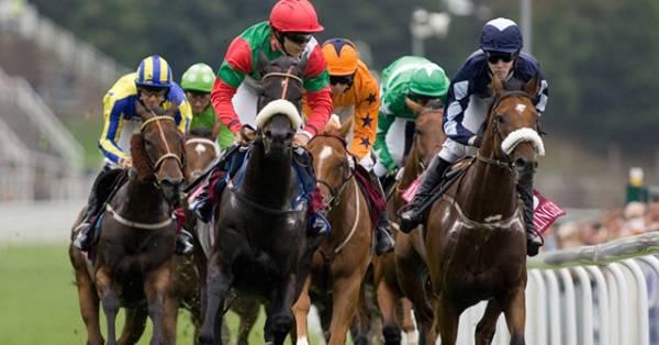 Chester May Hospitality Horses