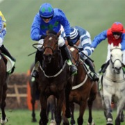 Horses running in the Cheltenham International Meeting