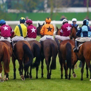 Jockeys and Horses at Cheltenham Racecourse