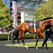 Racehorse and handler at Royal Ascot