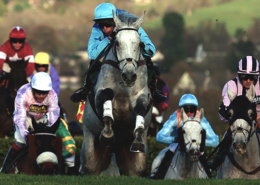 Horses Racing at Cheltenham