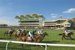 Newmarket Racecourse Horses
