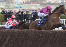 Cheltenham Festival - Horses to Watch