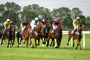 Flat Racing Horses York Racecourse