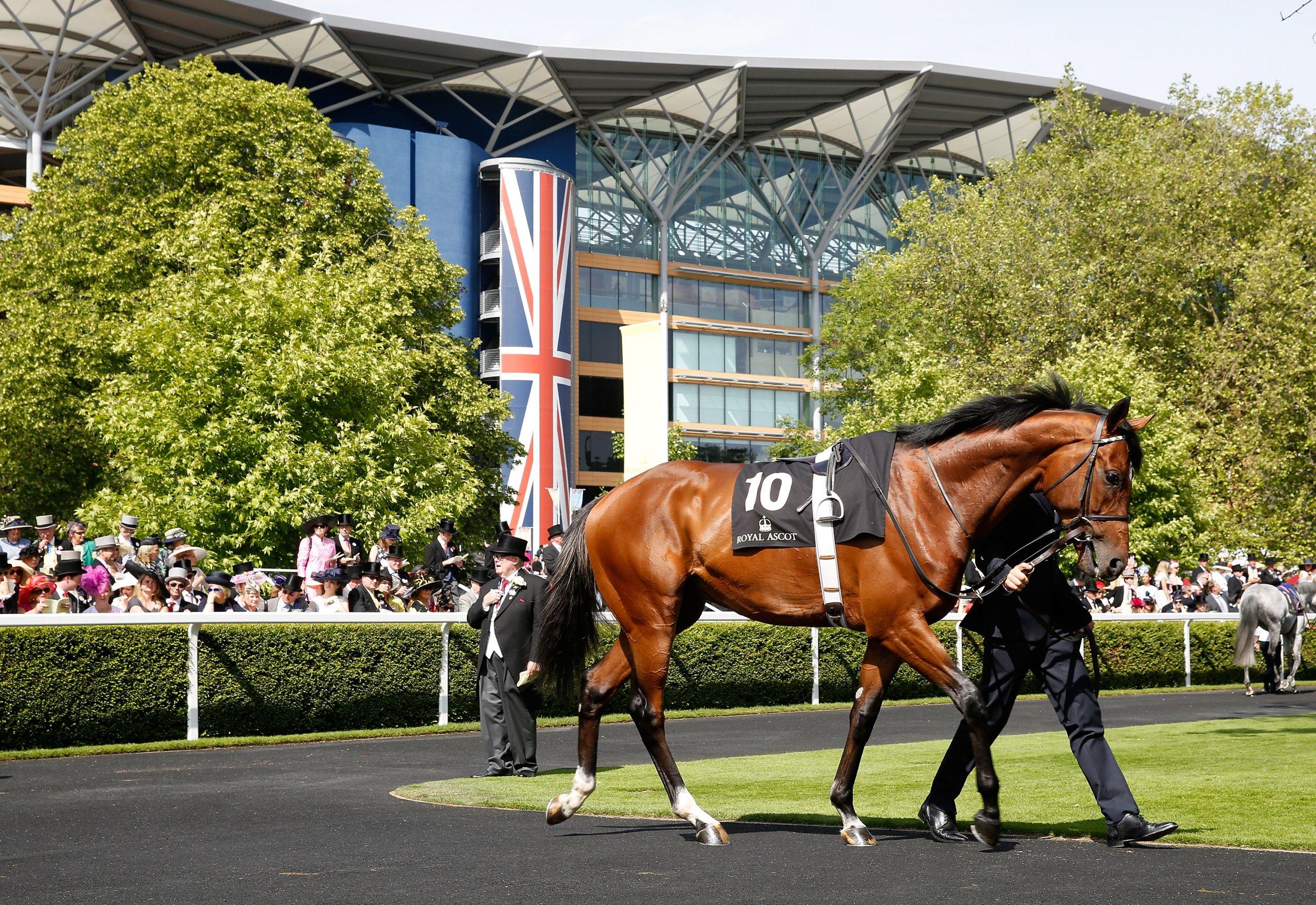 horse parading at ascot racecourse during royal ascot