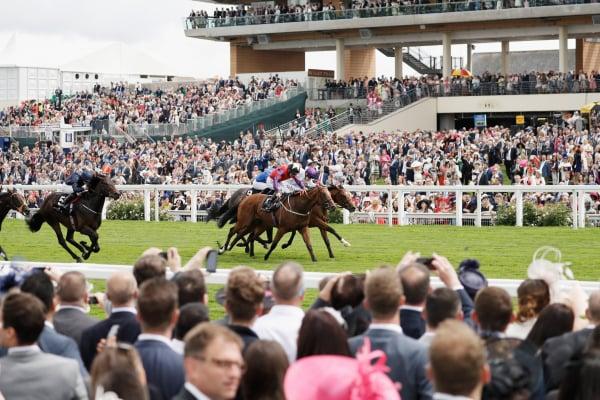 Royal Ascot Horses Running Down towards the Wining Post