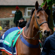 Cyrname Unlikely to Run Again This Season After Ascot Fall