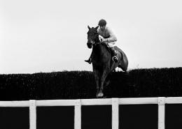 arkle cheltenham festival