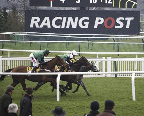 cheltenham racing